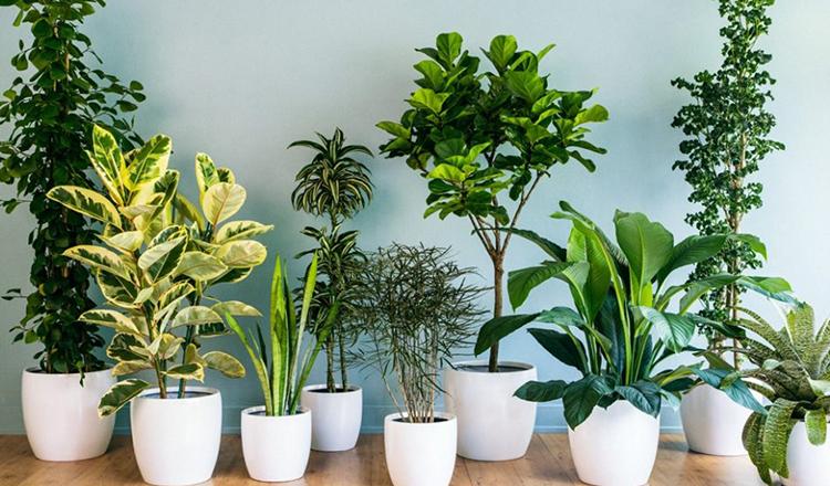 10 plante de interior care aduc fericire si prosperitate acasa